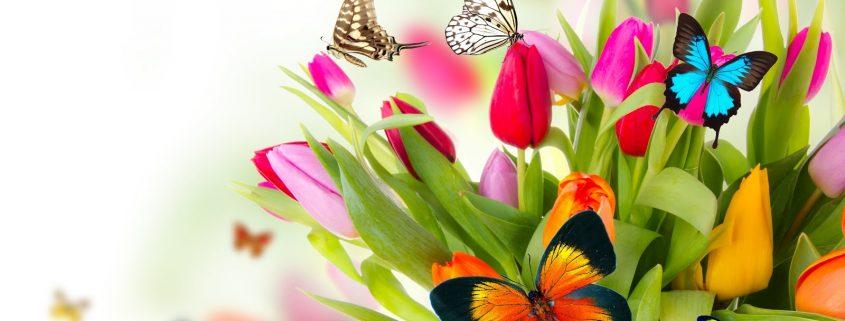 primavera-11
